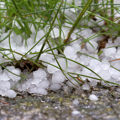 Hailstones laying in grass.
